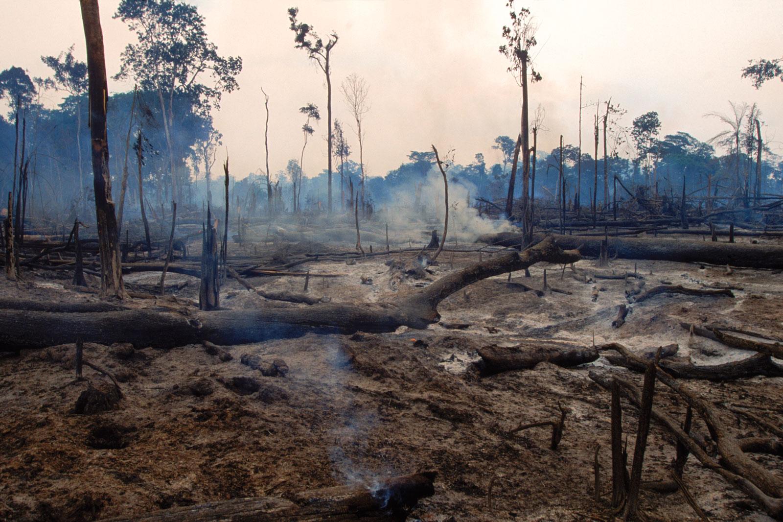 RAW - Rainforest Awareness Worldwide | A non profit